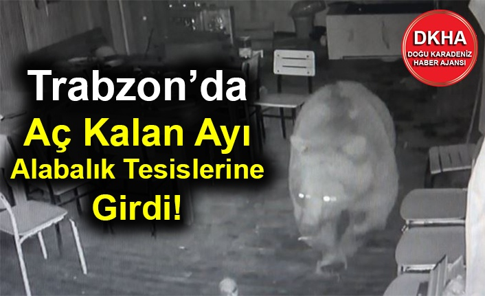 Trabzon'da Aç Kalan Ayı Alabalık Tesislerine Girdi!