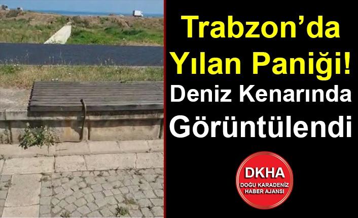 Trabzon'da Yılan Paniği! Deniz Kenarında Görüntülendi
