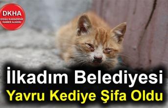 İlkadım Belediyesi Yavru Kediye Şifa Oldu