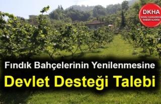 Fındık Bahçelerinin Yenilenmesine Devlet Desteği...