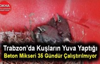 Trabzon'da Kuşların Yuva Yaptığı Beton Mikseri...