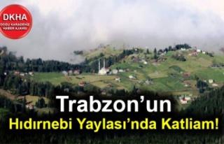 Trabzon'un Hıdırnebi Yaylası'nda Katliam!