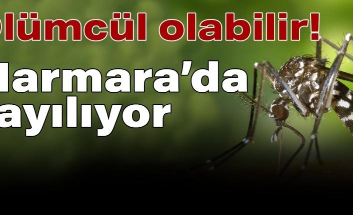 Marmara'da Asya Kaplan Sivrisineği İstilası: Ölümcül Hastalıkları Bulaştırıyor